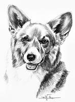 Pembroke Welsh Corgi Head