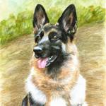 """Portrait of a German Shepherd Dog"" by Stonehenge"