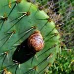 """Snail on Cactus"" by MelanieDoty"
