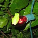 """""""frog on bulb"""" by MPMPatrick"""