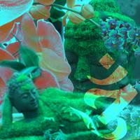 Buddhas and Orchids 2