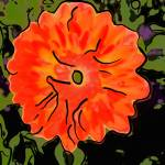 """Orange Flower"" by garlanddunston"