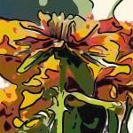 """""""African Daisy"""" by garlanddunston"""