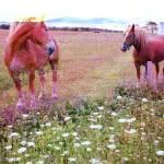 """""""Horses"""" by RonErickson"""