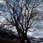 """Mody Tree"" by christmas1"
