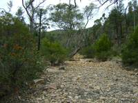 Flinders Ranges creekbed