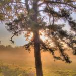 """Pitch Pine Sunrise HDR"" by chaseschiefer"