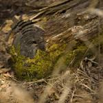 """Mossy Log"" by janesprints"