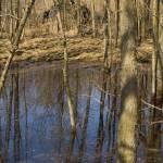 """Wetland"" by janesprints"