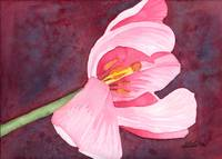 Tilted Pink Tulip Watercolor