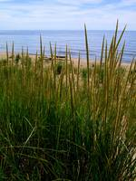 Dune Grass by the Lake
