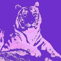 The Purple Tiger