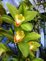 Orange Yellow Green Orchid