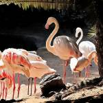 """""""Flamingo Group"""" by pluppy"""