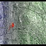"""Back Yard Nature Shots"" by Briggs"