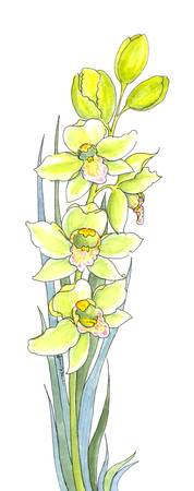 Cymbidium Leaves