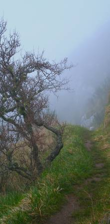 Foggy Morning Trail, New Zealand