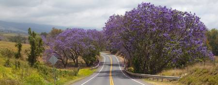 Road Through Purple II