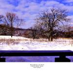 """Bird Watchers Bench winter crab tree nature center"" by TomJelen"