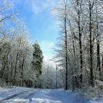 """Snowy Lane"" by Lorraine_Sommer"
