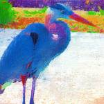 """""""Great blue heron abstract"""" by rbb2676"""