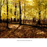 """""""Chicago Cook FPD Busse maples fall"""" by TomJelen"""