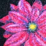 """""""Gerber Daisy"""" by Schambon"""