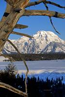 Mount Moran and dead tree