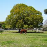 """Horse and Egret"" by weberquinn3025"