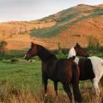 """Two Horses in Field"" by atonalarts"