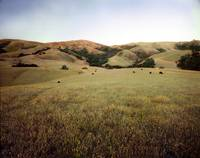 Mission Peak, Spring time, Fremont, California by WorldWide Archive