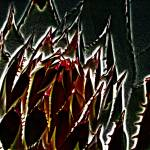 """Agave Points"" by Attentiongetters"