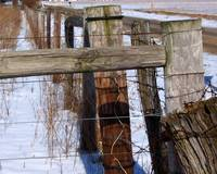 Fence in Winter 1