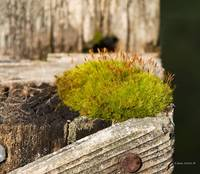 Moss on an Old Gate