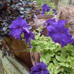 """""""Petunia Garden"""" by wot53"""