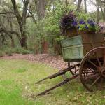 """Wagon Garden"" by wot53"