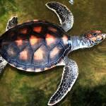 """Loggerhead Turtle"" by pravine"