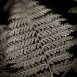 """Fern II"" by mfmarsphoto"