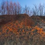 """Red Sunset Light on Dune Grasses Grand Mere State"" by CEMiller"