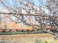Blossoms and Train Car