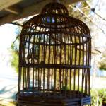 """""""I know why the Caged Bird sings"""" by jruthecreative"""