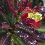 """Water Drops Plant 08"" by DavidWerk"