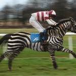 """Zebra racing. April Fool :)"" by andreagatti"
