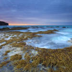"""Seaweed Sunrise"" by Dawsonimages"