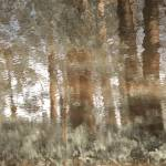 """Forêt enchantée"" by Woodsman"