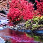 """Upper Zion In Fall"" by pbk"