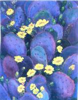 Purple Cactus Flowers