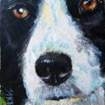 """Border Collie"" by TerryStanley"