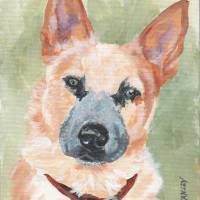 Australian Cattle Dog 1 Art Prints & Posters by Terry Stanley