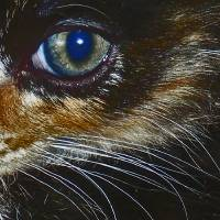 Cat's eye Art Prints & Posters by Leoza Drouillard